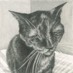 Joy's cat who disliked me for 15 years, then bonded with me so strongly after Joy's death that we were inseparable.